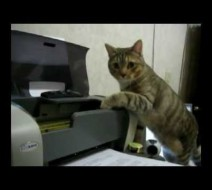 Obligatory Cat/Printer Video