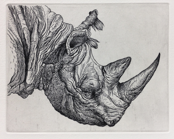 Head of Rhinoceros, 2014  5 x 6 inches  copperplate engraving
